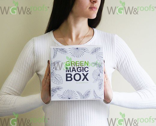 Green Magic Box by WGW&Roofs