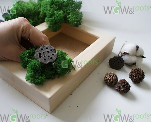 Green Magic Box by WGW&Roofs - Фото №4